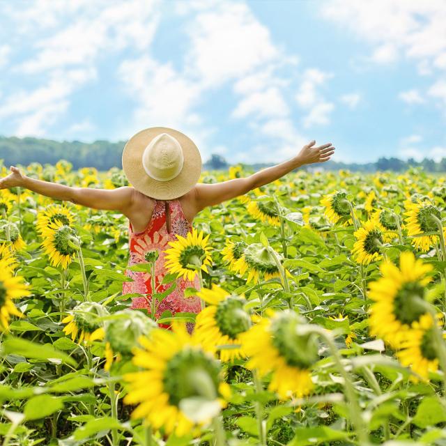 Woman enjoying in sunflower field
